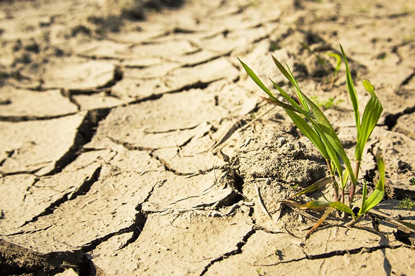 KLK-Blog-Post-Image_Plant-struggling-in-drought